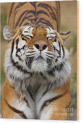 The Beautiful Siberian Tiger Wood Print by Boon Mee