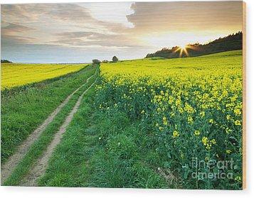 The Beautiful Yellow Rapeseed Field Wood Print by Boon Mee