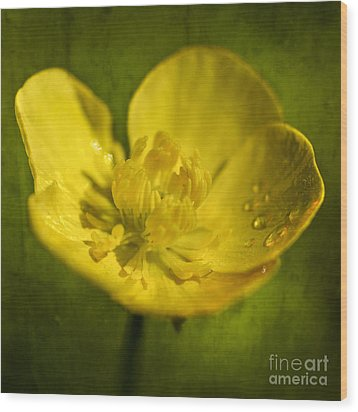 the beauty inside II Wood Print by Hannes Cmarits