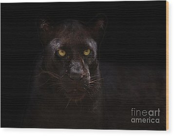 The Beauty Of Black Wood Print by Ashley Vincent