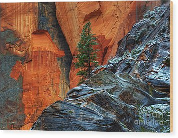 The Beauty Of Sandstone Zion Wood Print by Bob Christopher