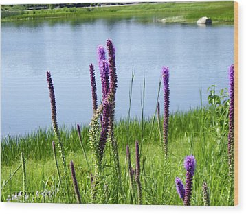 Wood Print featuring the photograph The Beauty Of The Liatris by Verana Stark