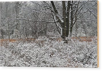 The Beauty Of Winter Wood Print by Aimee L Maher Photography and Art Visit ALMGallerydotcom