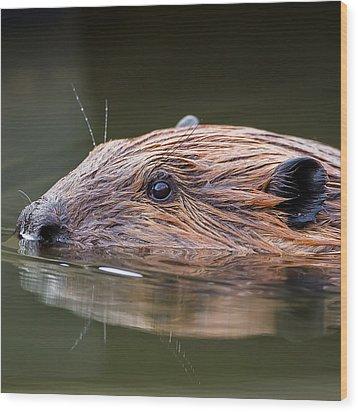The Beaver Square Wood Print