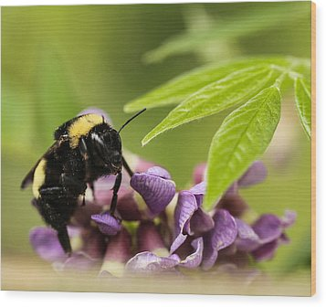 Wood Print featuring the photograph The Bee's Knees by Cathy Donohoue