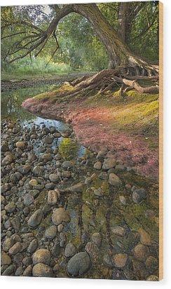 The Bend Wood Print by Michael Van Beber
