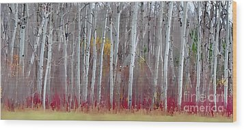 The Birches Panorama  Wood Print