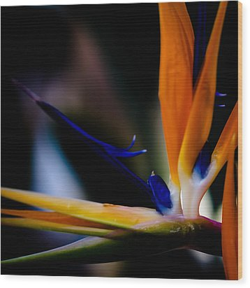 The Bird Of Paradise Wood Print by David Patterson