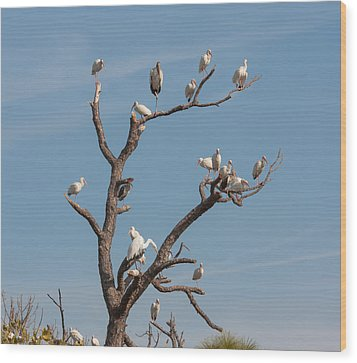 Wood Print featuring the photograph The Bird Tree by John M Bailey
