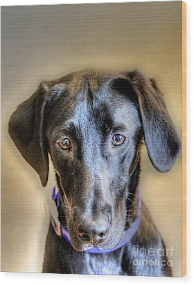The Black Lab Wood Print by Robert Pearson
