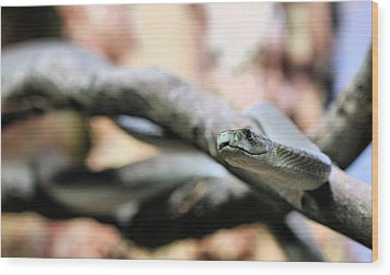 The Black Mamba Wood Print by JC Findley