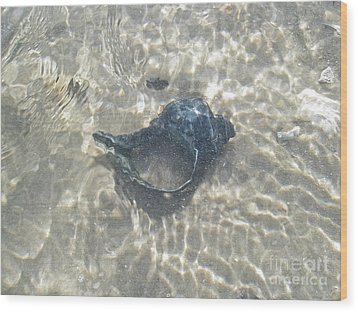 The Black Seashell Wood Print by Mother Nature