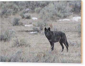 The Black Wolf Wood Print