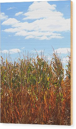 Wood Print featuring the photograph The Bloody Cornfield by Debra Kaye McKrill