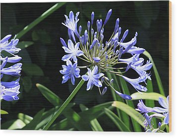 Wood Print featuring the photograph The Blue by Ivete Basso Photography