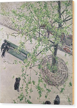 The Boulevard Viewed From Above Wood Print by Gustave Caillebotte