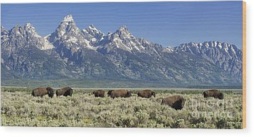 The Boys Club Of Grand Teton Wood Print by Sandra Bronstein
