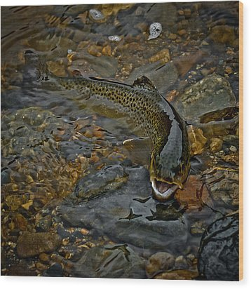 The Brown Trout Wood Print by Ernie Echols