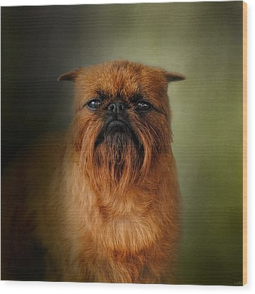 The Brussels Griffon Wood Print by Jai Johnson