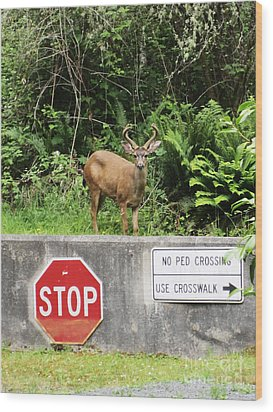The Buck Stops Here Wood Print by Kym Backland
