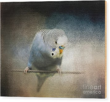 The Budgie Collection - Budgie 3 Wood Print by Jai Johnson