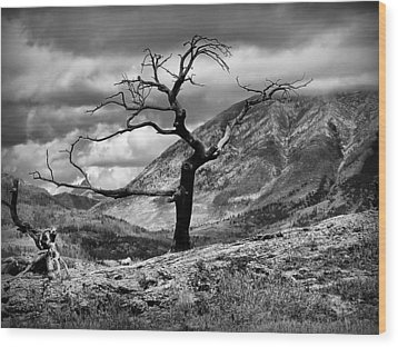 The Burmis Tree Wood Print