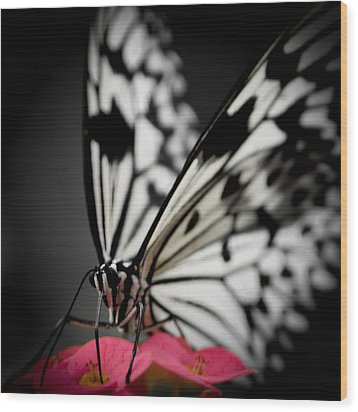 The Butterfly Emerges Wood Print by Jen Baptist