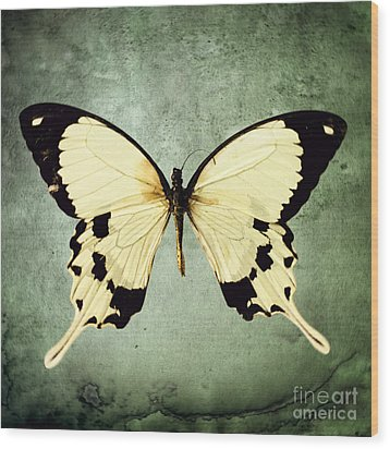 The Butterfly Project 1 Wood Print by Diane Miller