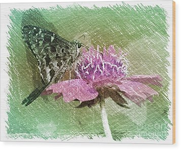 The Butterfly Visitor Wood Print by Carol Groenen
