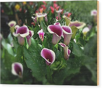 The Calla Lilies Are In Bloom Again Wood Print