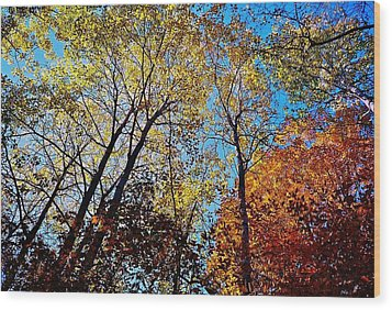 Wood Print featuring the photograph The Canopy by Daniel Thompson