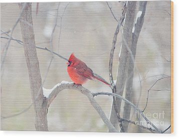 The Cardinal Wood Print by Kay Pickens