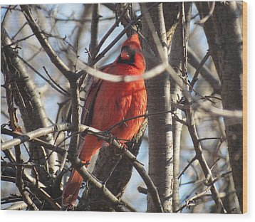 Wood Print featuring the photograph The Cardinal by Nikki McInnes