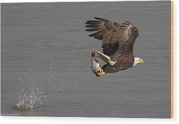 The Catch  Wood Print by Glenn Lawrence