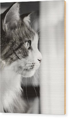 The Cat's Meow Wood Print