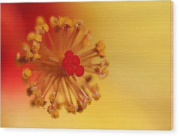 Wood Print featuring the photograph The Center Of The Hibiscus Flower by Debbie Oppermann