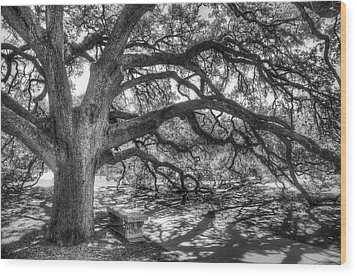 The Century Oak Wood Print by Scott Norris