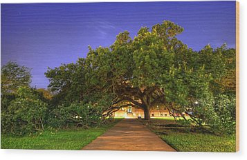 The Century Tree Wood Print