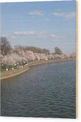 The Cherry Blossom Festival In D.  C Wood Print