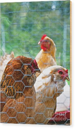 The Chickens Wood Print by Gwyn Newcombe