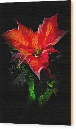 The Christmas Flower - Poinsettia Wood Print by Gynt