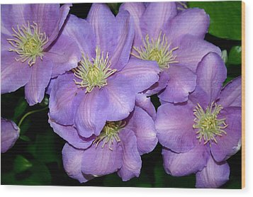 The Clematis Gang Wood Print by Sarah OToole
