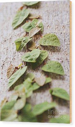 The Climb Wood Print by Pamela Gail Torres