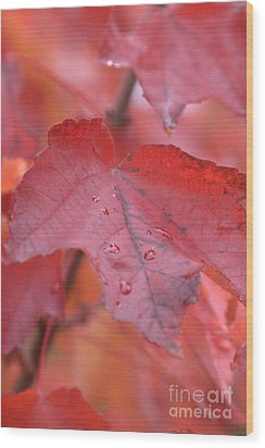 The Color Of Autumn Wood Print by Rich Collins