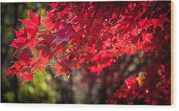 The Color Of Fall Wood Print by Patrice Zinck