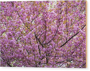 The Color Purple 2 Wood Print by Paul W Faust -  Impressions of Light