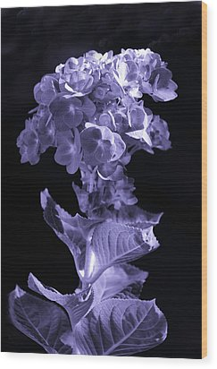 The Color Purple Wood Print by Sandi OReilly