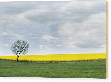 The Colors Of Spring Wood Print