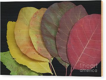 The Colours Of Nature Wood Print by Stela Taneva