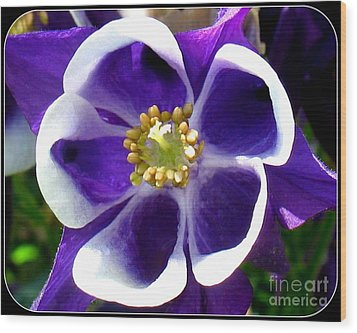 The Columbine Flower Wood Print by Patti Whitten